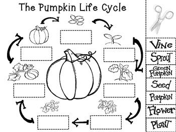 pumpkinlifecycleworksheet